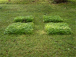 Lawn sculpture after mowing